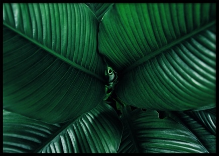 Dark Green Leaves Poster in the group Prints / Floral at Desenio AB (12057)