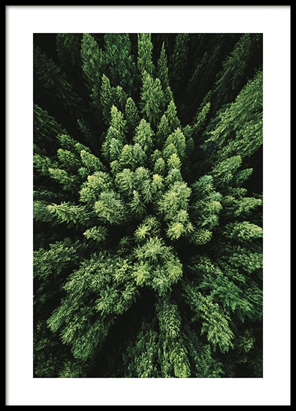 Aerial Forest Poster in the group Prints / Nature at Desenio AB (12083)