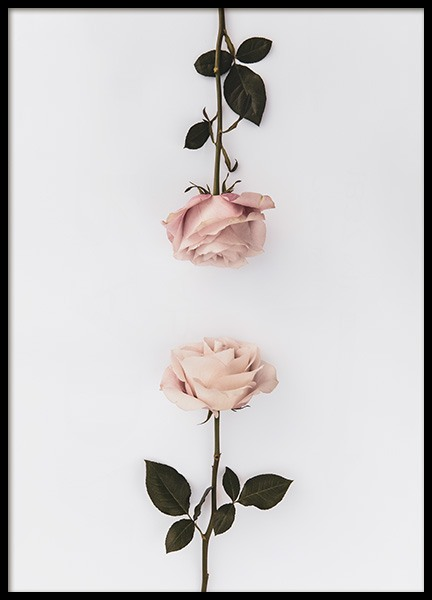 Two Roses Poster in the group Prints / Floral at Desenio AB (12164)