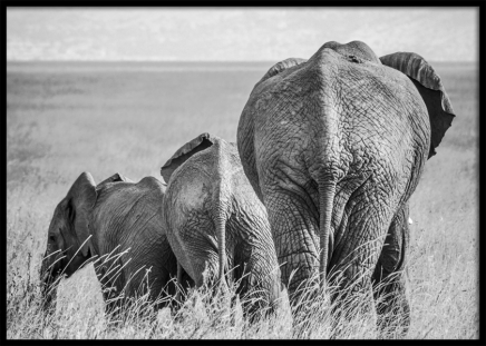 Elephant Family Poster in the group Prints / Black & white at Desenio AB (12305)