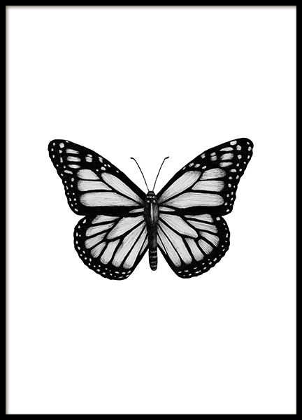 Butterfly Drawing Poster in the group Prints / Black & white at Desenio AB (12307)