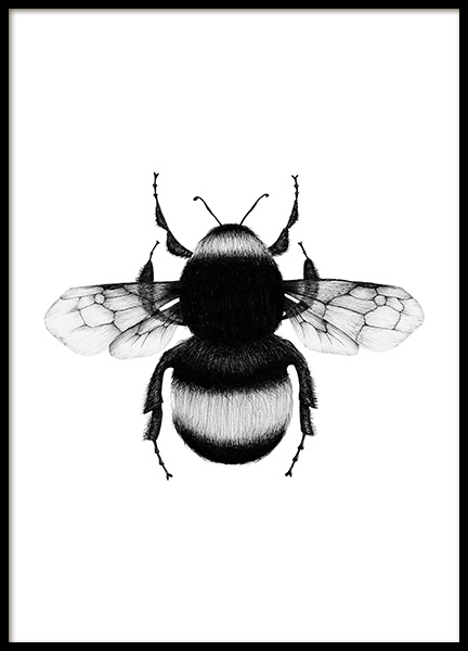 Bumblebee Drawing Poster in the group Prints / Black & white at Desenio AB (12309)