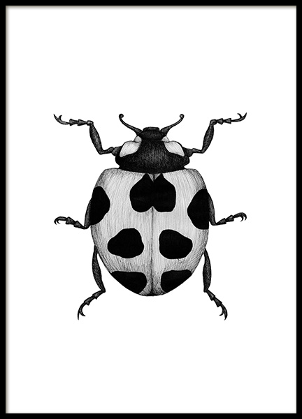 Ladybird Drawing Poster in the group Prints / Black & white at Desenio AB (12310)
