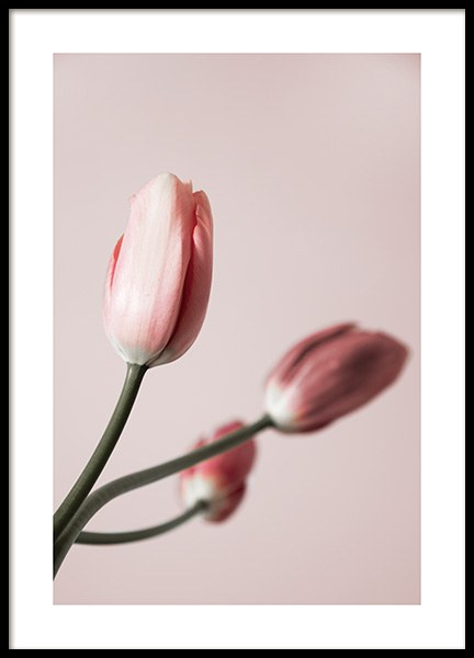 Tulip Buds No4 Poster in the group Prints / Floral / Flowers at Desenio AB (12325)