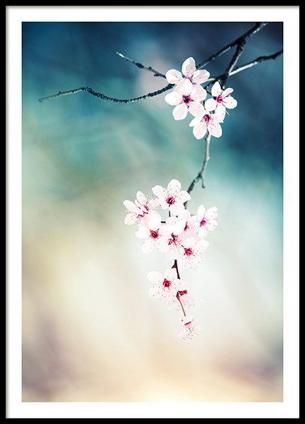 Cherry Blossom Poster in the group Prints / Photographs at Desenio AB (12332)