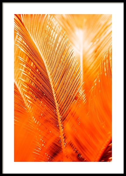 Orange and Gold Palm Poster in the group Prints / Floral at Desenio AB (12403)