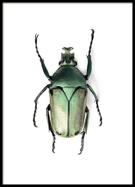 Green Insect Poster in the group Prints / Animals at Desenio AB (12407)