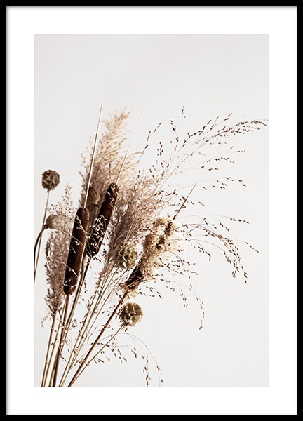 Dry Reeds No1 Poster in the group Prints / Photographs at Desenio AB (12419)