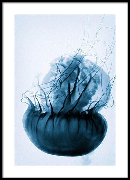 Floating Blue Jellyfish Poster in the group Prints / Photographs at Desenio AB (12434)
