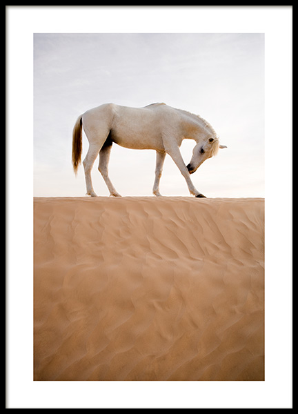 Horse in Desert Poster in the group Prints / Animals at Desenio AB (12534)