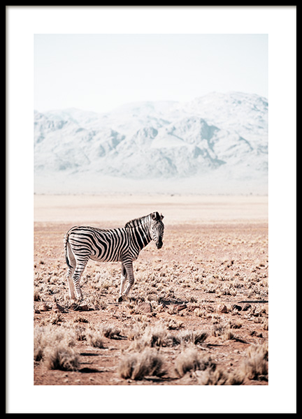 Zebra in the Wild Poster in the group Prints / Animals at Desenio AB (12539)