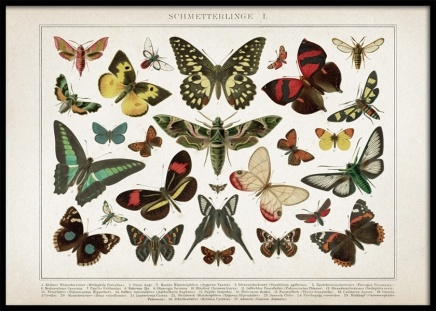 Vintage Butterflies No1 Poster in the group Prints / Retro & vintage at Desenio AB (12553)