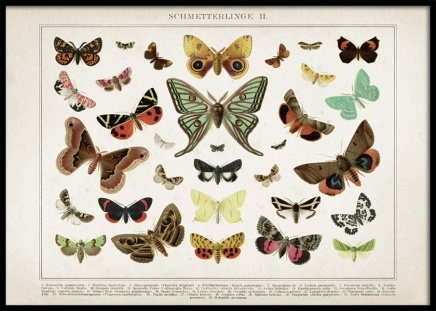 Vintage Butterflies No2 Poster in the group Prints / Retro & vintage at Desenio AB (12554)