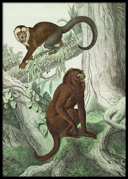 Vintage Monkeys No2 Poster in the group Prints / Vintage at Desenio AB (12556)