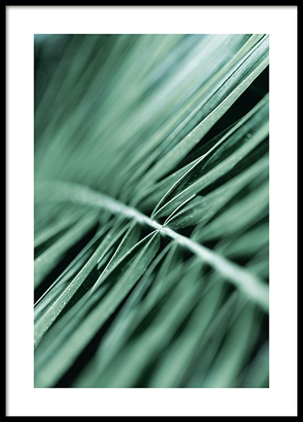 Dreamy Palm Leaf Poster in the group Prints / Photographs at Desenio AB (12563)