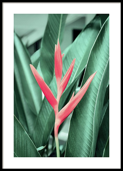 Tropical Flower Poster in the group Prints / Floral at Desenio AB (12565)
