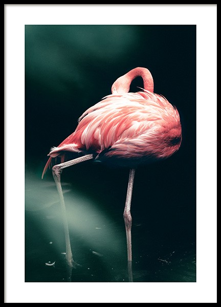 Wild Flamingo Poster in the group Prints / Photographs at Desenio AB (12566)