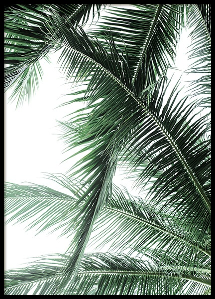 Palm Fronds Poster in the group Prints / Photographs at Desenio AB (12567)