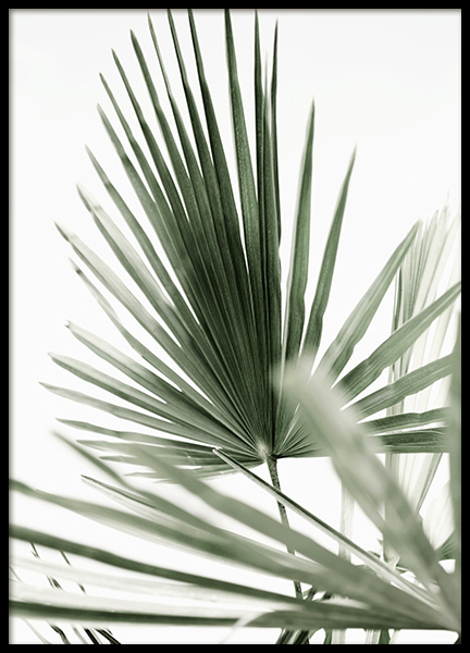 Tropic Palm Poster in the group Prints / Photographs at Desenio AB (12568)