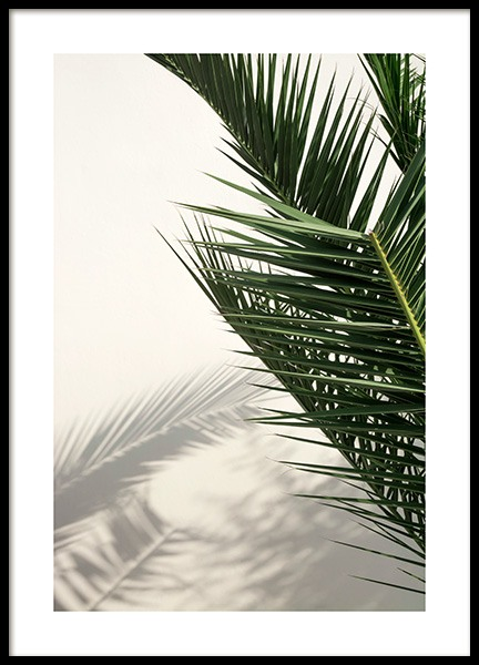 Palm Shadow Poster in the group Prints / Photographs at Desenio AB (12569)