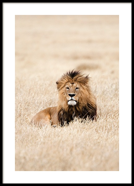Lion King Poster in the group Prints / Photographs at Desenio AB (12573)