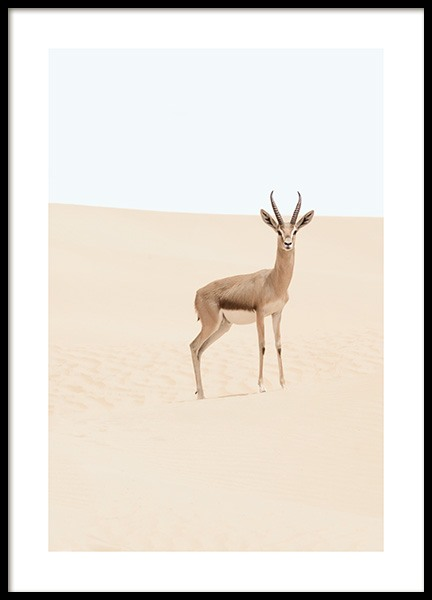 Arabian Gazelle Poster in the group Prints / Photographs at Desenio AB (12577)