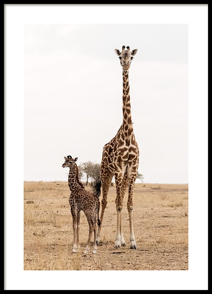 Mother and Baby Giraffe Poster in the group Prints / Animals at Desenio AB (12578)