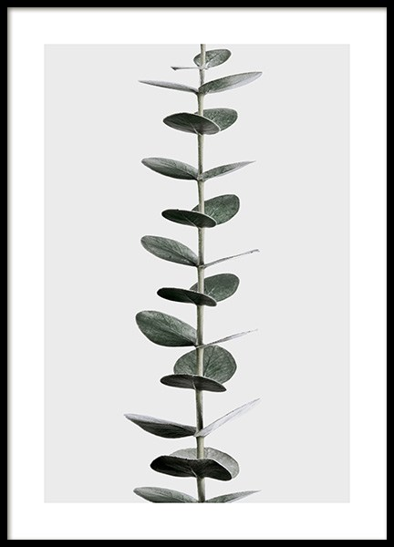 Eucalyptus Stem Poster in the group Prints / Photographs at Desenio AB (12580)