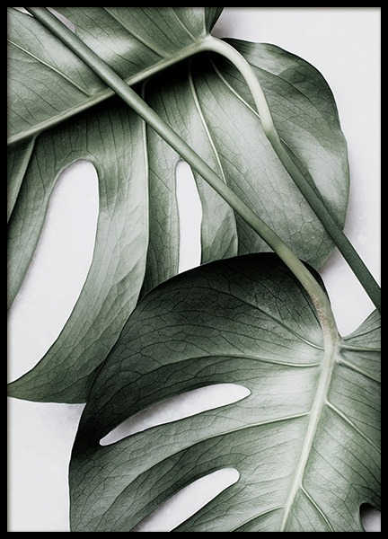 Monstera Pair Poster in the group Prints / Floral / Monsteras at Desenio AB (12584)