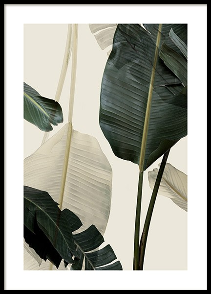 Banana Leaf Shades No1 Poster in the group Prints / Photographs at Desenio AB (12585)