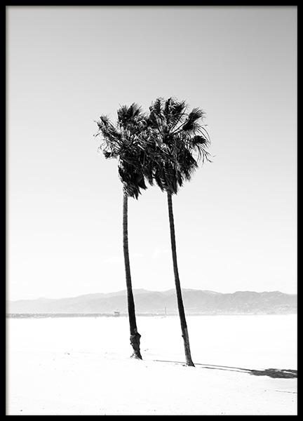 Palm Trees B&W Poster in the group Prints / Nature at Desenio AB (12649)