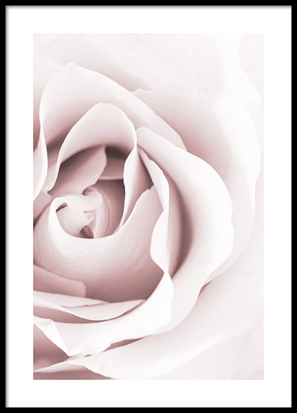 Dreamy Rose Poster in the group Prints / Photographs at Desenio AB (12653)
