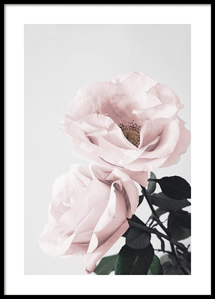 Blooming Roses Poster in the group Prints / Photographs at Desenio AB (12656)