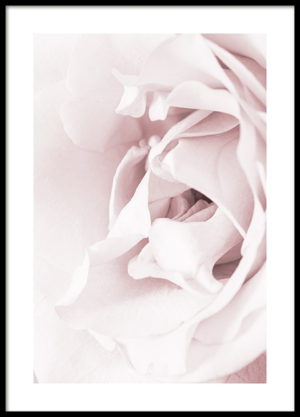 Blossoming rose Poster in the group Prints / Photographs at Desenio AB (12659)