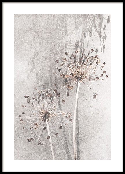Dried Allium Flowers No1 Poster in the group Prints / Photographs at Desenio AB (12661)