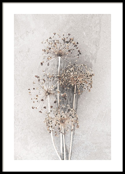 Dried Allium Flowers No2 Poster in the group Prints / Photographs at Desenio AB (12662)