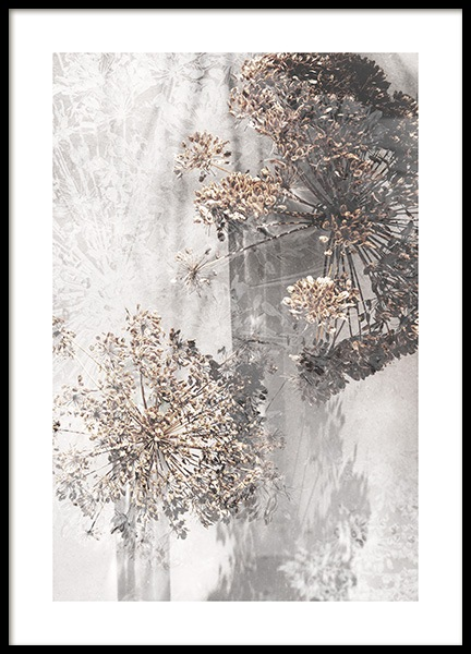 Dried Giant Hogweed No1 Poster in the group Prints / Photographs at Desenio AB (12663)