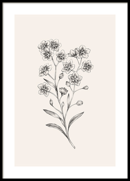 Forget Me Not Sketch Poster in the group Prints / Botanical at Desenio AB (12688)