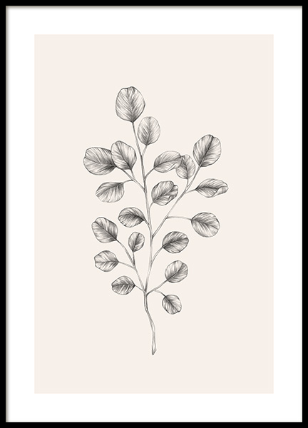 Eucalyptus Sketch Poster in the group Prints / Illustrations at Desenio AB (12689)