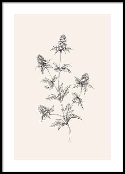 Thistle Sketch Poster in the group Prints / Botanical at Desenio AB (12690)