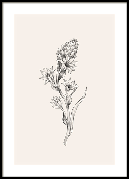 Tuberose Sketch Poster in the group Prints / Botanical at Desenio AB (12691)