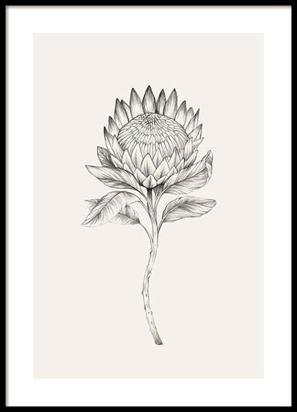 Protea Sketch Poster in the group Prints / Illustrations at Desenio AB (12693)