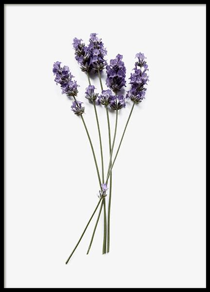 Lavender Poster in the group Prints / Floral at Desenio AB (12833)