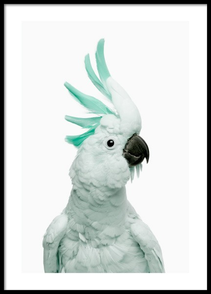 Mint Cockatoo Poster in the group Prints / Animals / Birds at Desenio AB (12842)