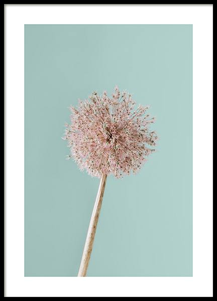 Giant Allium Poster in the group Prints / Photographs at Desenio AB (12845)