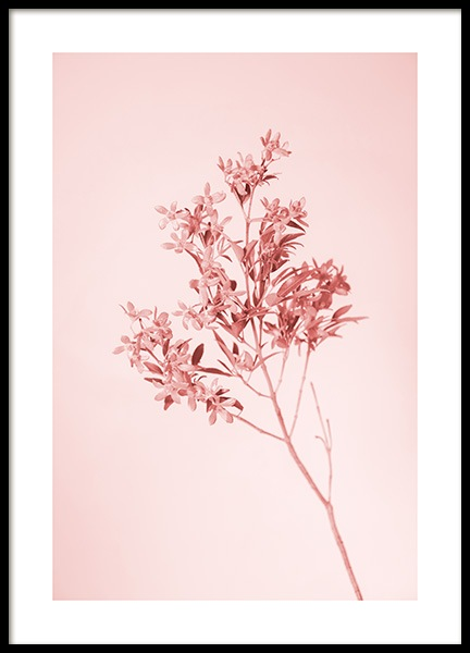 Pink Flower Poster in the group Prints / Floral at Desenio AB (12851)