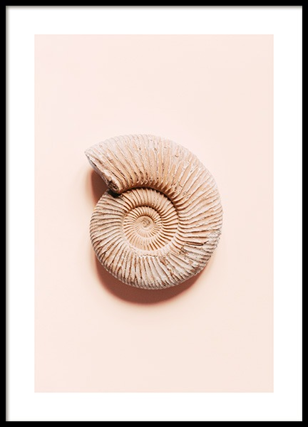 Ammonite Poster in the group Prints / Photographs at Desenio AB (12859)