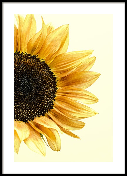 Sunflower Poster in the group Prints / Photographs at Desenio AB (12864)