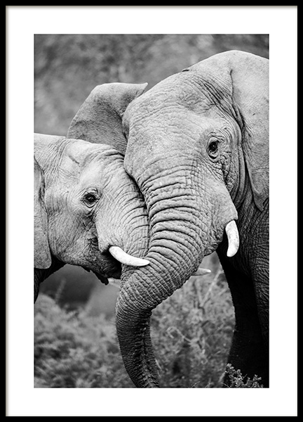 Elephant Friends Poster in the group Prints / Black & white at Desenio AB (12887)