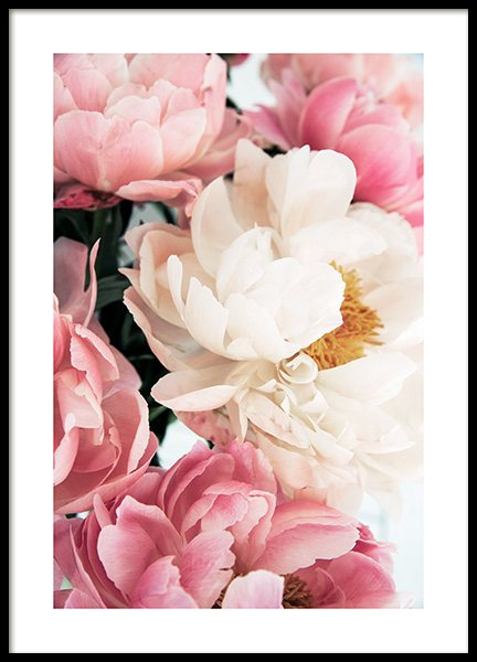 Pink Peonies No1 Poster in the group Prints / Floral / Flowers at Desenio AB (12904)